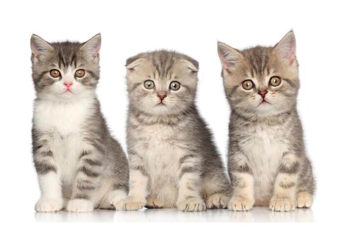 Image of cats sitting around